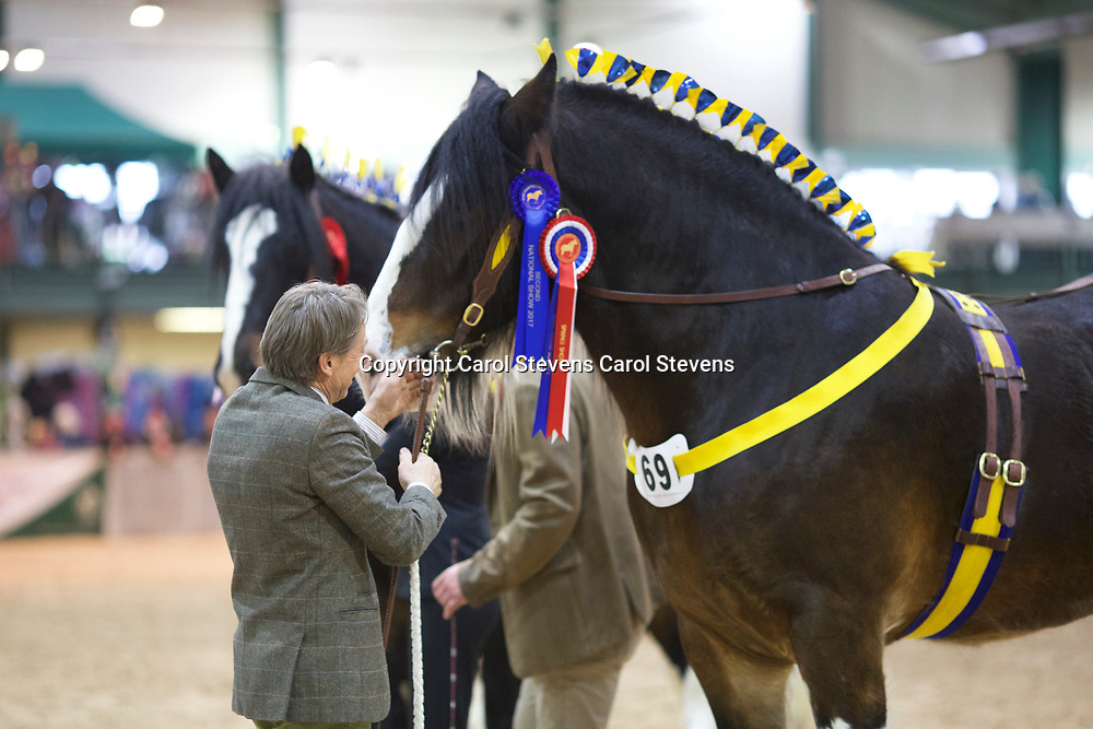 William Bedford's LANDCLIFFE CHARLIE  f 2014<br />