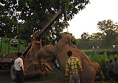 Elephant Killed-01 (In West Bengal State of India)