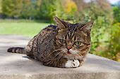 LiL Bub the Cat