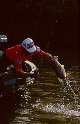 Fisherman pulling a freshly caught fish - Largemouth bass (Micropterus psalmoides) - from a lake into his boat.