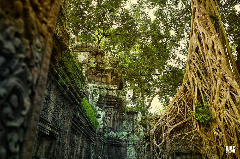 Ancient ruins of Ta Prohm Temple, Angkor, Cambodia.
