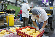 05 MAY 2008 -- PHOENIX, AZ: MARIA GONZALEZ packs corn tortillas on the production line at La Canasta in Phoenix. La Canasta uses 20,000 - 25,000 pounds of corn daily to make almost two million tortillas. Josie Ippolito, President of La Canasta, said the price of the corn she buys has shot up more than 50 percent since November, 2007 and is expected to double by the end of this year. This in addition to the 200 percent increase in the price of wheat flour she uses in other products at La Canasta.   Photo by Jack Kurtz