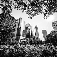 Boston downtown city buildings through trees. Boston is a major American city on the East Coast of the United States.