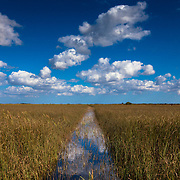 The reeds are separated by airboats creating a water highway within the Everglades.
