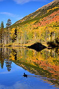 Beaver abode in fall, near Winfield, Colorado.