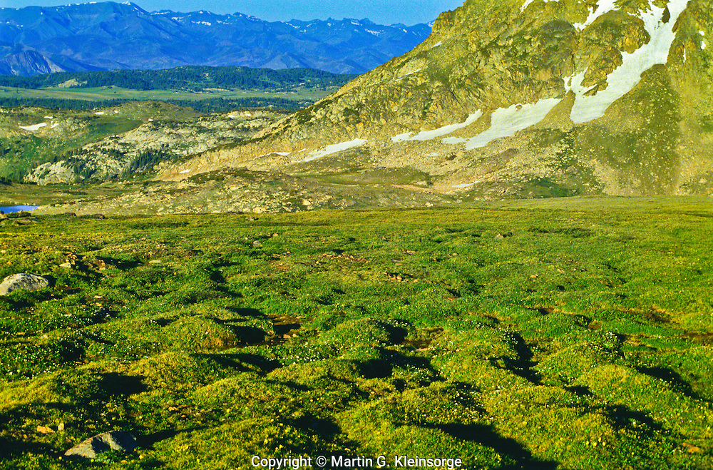 Alpine tundra on the Beartooth Plateau.  The uneven ground is caused by frost heave, the freezing and thawing of the ground over a period of years.    Beartooth Mountains, Wyoming.