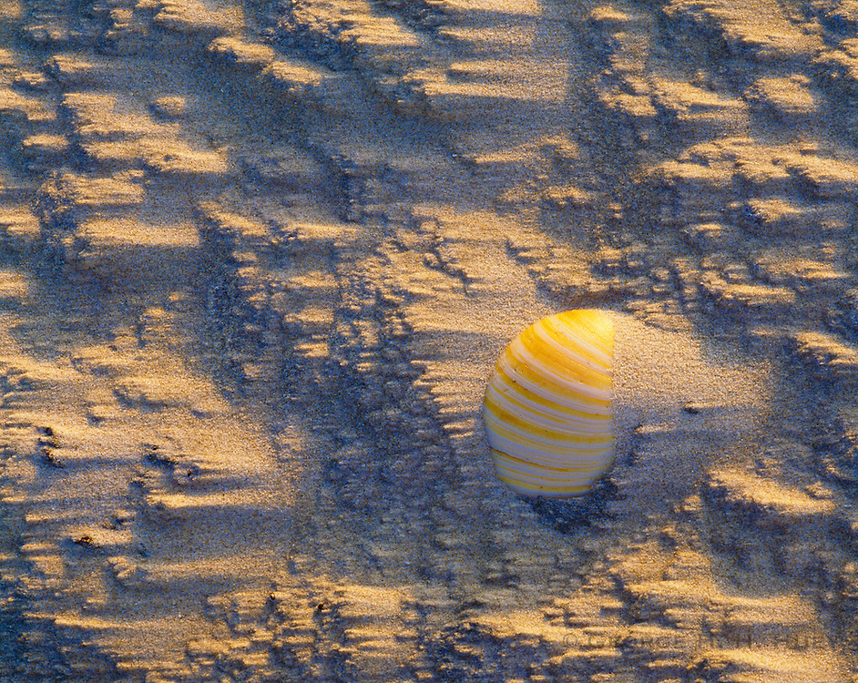 0505-1036 ~ Copyright:  George H. H. Huey ~ Bivalve shell covered by windblown sand.  Padre Island National Seashore, Texas.