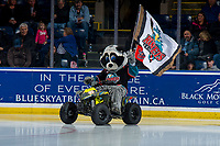 KELOWNA, CANADA - FEBRUARY 6: Rocky Raccoon, the mascot of the Kelowna Rockets enters the ice against the Spokane Chiefs  on February 6, 2019 at Prospera Place in Kelowna, British Columbia, Canada.  (Photo by Marissa Baecker/Shoot the Breeze)
