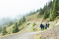 Hurricane  Hill Trail. Hurricane Ridge, Olympic National Park, WA.
