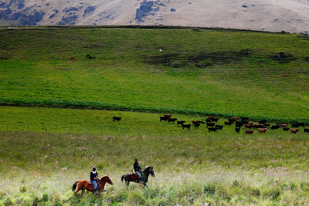 Cattle ranchers in the Andean Mountains, Napo Province.