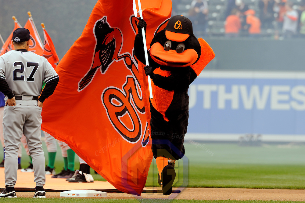 06 April 2009:  The Baltimore Orioles mascot takes the field on opening day prior to the game against the New York Yankees at Camden Yards in Baltimore, MD.  The Orioles defeated the Yankees 10-5 in the home opener to start the major league regular season.  ****For Editorial Use Only****