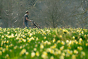 © Licensed to London News Pictures. 22/03/2012. Kew, UK. A man pushes a pram through the daffodils. People enjoy the spring sunshine in The Royal Botanic Gardens at Kew today, 22 March 2012. Temperatures are set to reach 18 degrees celsius in some parts of the UK today. Photo credit : Stephen SImpson/LNP