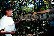 Jede der im Poço das Antas Reserve lebenden Goldgelben-Löwenäffchen-Gruppen wird regelmäßig in Fallen gefangen um Jungtiere zu markieren und die Entwicklung der Individuen zu studieren. Mitarbeiter der Organisation Associação Mico-Leão-Dourado bestücken die Fallen mit Bananen als Köder.. | Each group of Golden Lion Tamarins living in the Poço das Antas Reserve is regularly cought by members of the Associação Mico-Leão-Dourado to mark the new offspring and study the development of the individuals. A banana in the trap serves as a bait.