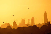 UNITED KINGDOM, London: 04 August 2015 Birds fly in front of the London landscape as the sun rises this morning in Richmond Park . Rick Findler / Story Picture Agency