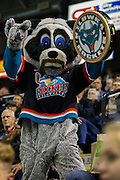 KELOWNA, CANADA - NOVEMBER 5:  Rocky Raccoon at the Kelowna Rockets game on November 5, 2016 at Prospera Place in Kelowna, British Columbia, Canada.  (Photo By Cindy Rogers/Nyasa Photography,  *** Local Caption ***