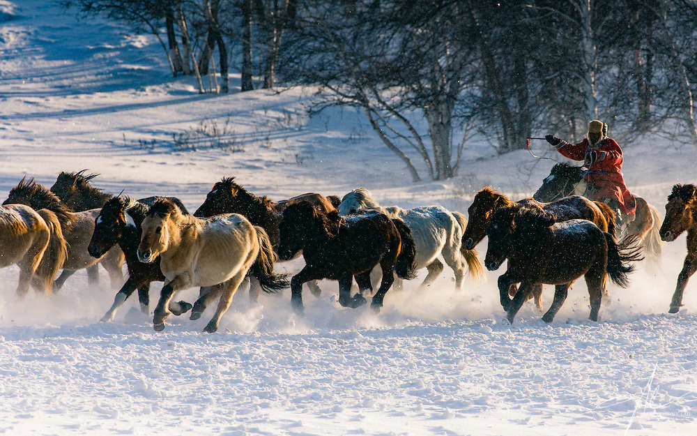 Inner Mongolian horseman commanding his horse to made a sharp turn on the snow ground