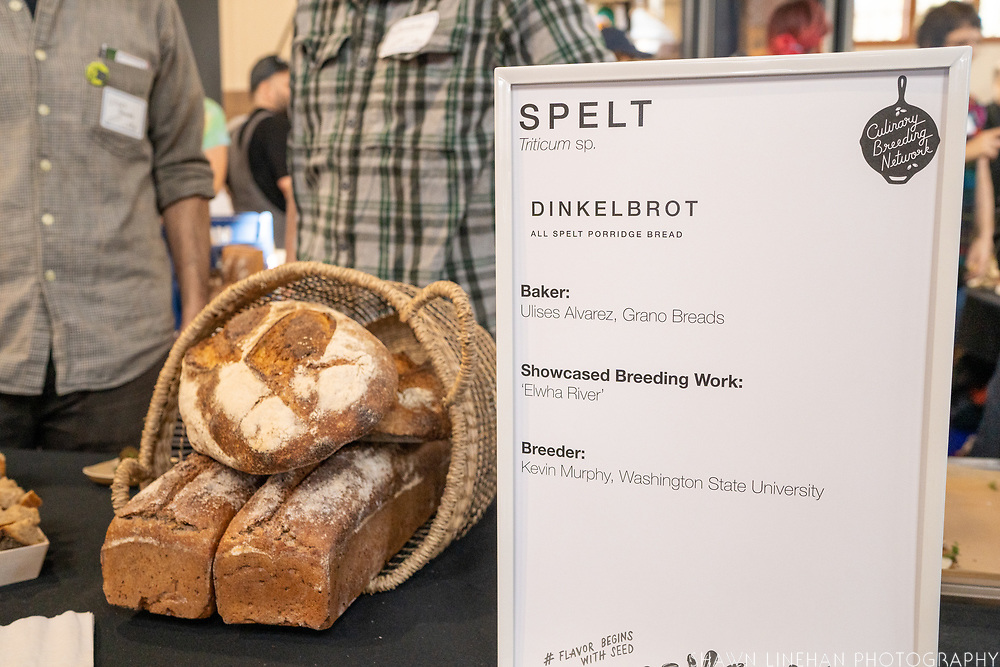 Spelt, Triticum sp.<br /> Showcase: 'Elwha River'<br /> Breeder: Kevin Murphy, Washington State University Baker: Ulises Alvarez, Grano Breads