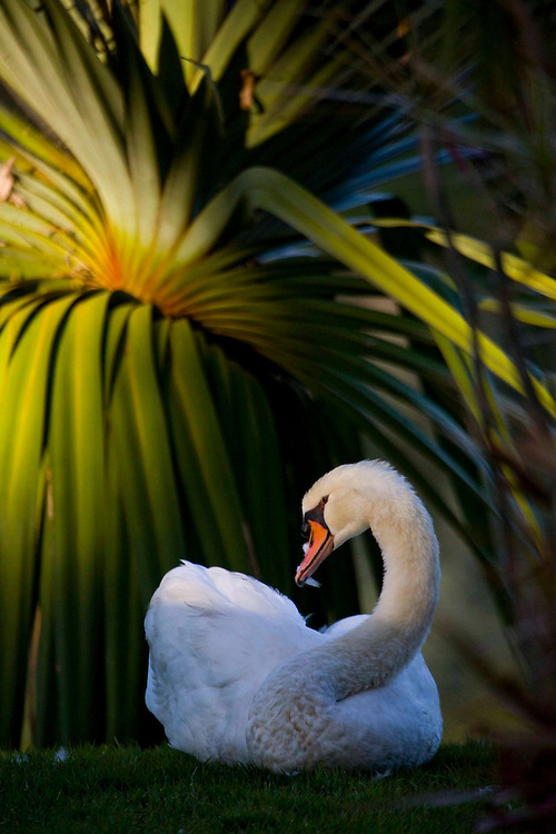 Brumadinho_MG, Brasil...Centro de Arte Contemporanea Inhotim (CACI). Na foto um pato...Inhotim Contemporary art Center (CACI). In this photo, a duck...Foto: JOAO MARCOS ROSA /  NITRO