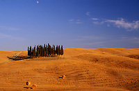 cypresses in Tuscany- Photograph by Owen Franken