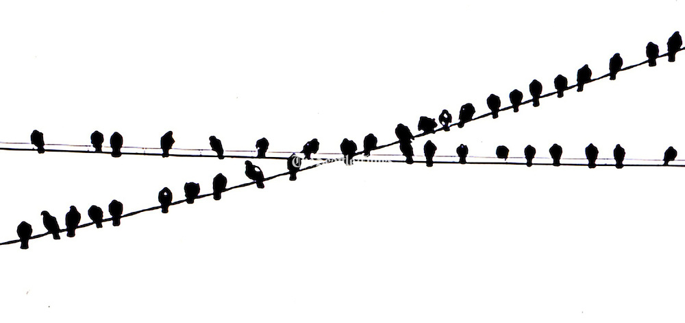 Birds on a wire from a photo taken in the 1970s. (Greg Gilbert / The Seattle Times)