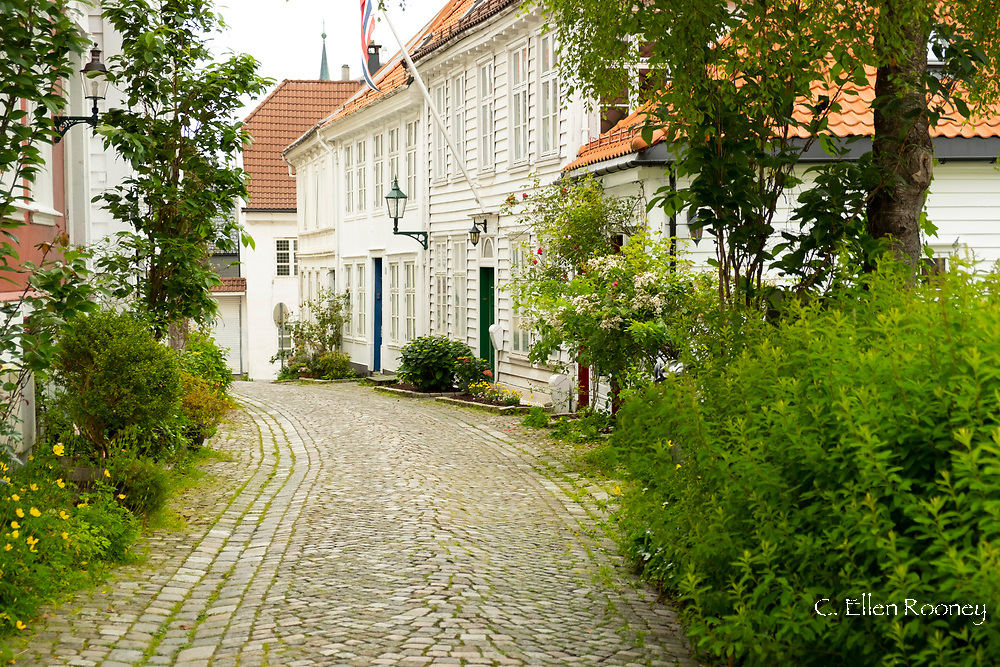 Timber houses surrounded by greenery on a cobblestone street in the Nordness section of Bergen, Norway, Europe
