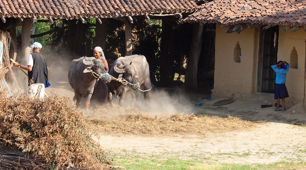 Man and woman working on a farm, Bardiya, Nepal