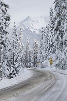 Mount Baker Highway, State Route 542,  in winter.