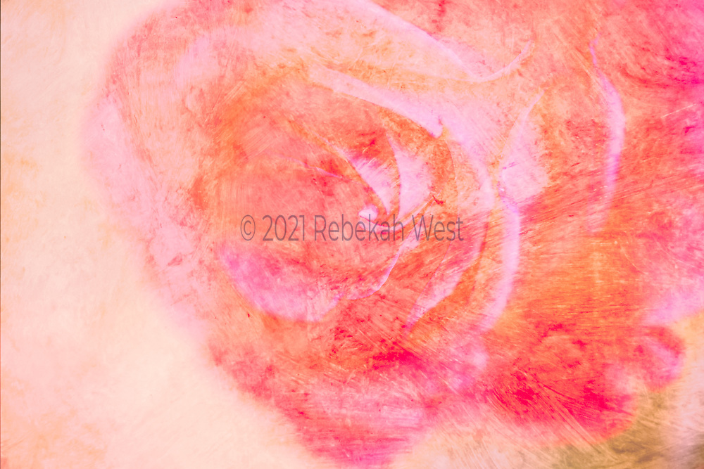 Flower art, feminine, colorful. Abstract super close up of red and pink rose, almost full frame, sits toward upper right corner, millennial pink background and highlights, orange, magenta, pink, painterly, chalk quality, art, photo, flower, feminine, 5616 x 3744, high resolution, horizontal, could present vertical, voluptuous, spiral