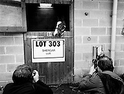 &lsquo;Lot 303&rsquo;, an as yet unnamed foal sired by the famous Shergar, poses for the cameras prior to an auction to be held at Goffs Sales, Kildare. On 8 February 1983, Shergar was kidnapped from the Ballymany Stud, Curragh, County Kildare, allegedly by the IRA. Shergar had been syndicated for &pound;10 million by his owner, the Aga Khan, after winning the Epsom Derby by a record ten lengths. Despite a wide-ranging investigation, no trace of the horse was ever found.<br />