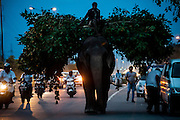 12th September 2014, New Delhi, India. An elephant loaded with fodder pillaged from the city's trees is ridden by a mahout on a busy road in New Delhi, India on the 12th September 2014<br />
