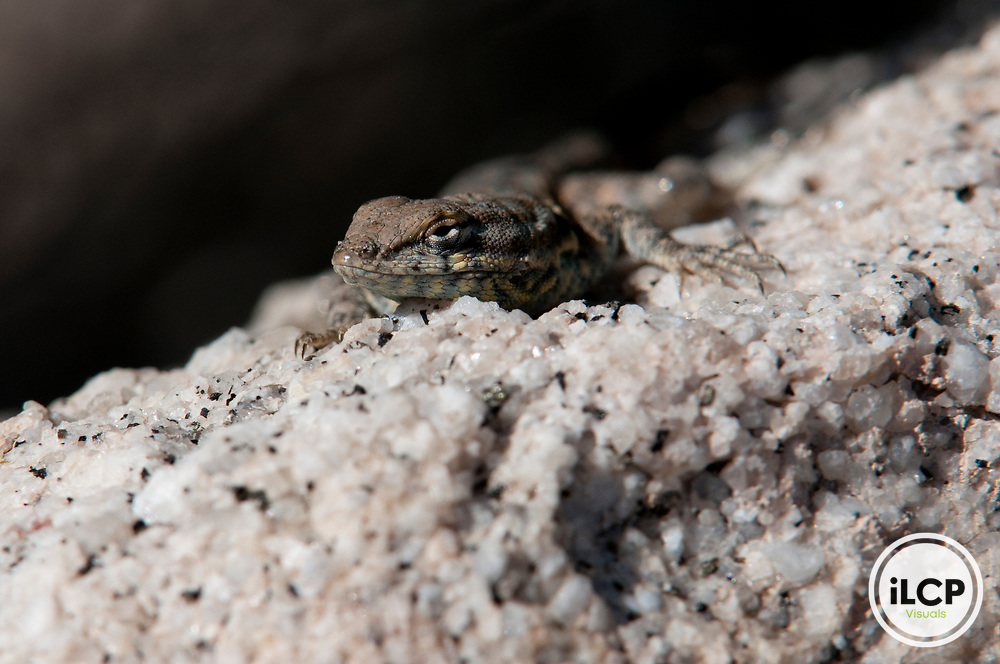 Small unidentified lizard sunning itself.