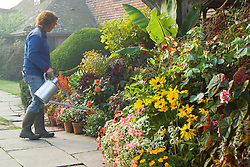 Tara Cully watering the pot display in front of the porch at Great Dixter on a misty autumnal morning. Container display includes Ensete ventricosum, Pelargonium 'Frank Headley', Pseudopanax lessonii 'Gold Splash', Begonia scharfii, rudbeckias, fuchsias and aeoniums