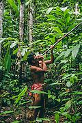 Iban people, former headhunters, hunting using blowgun, Sarawak, Borneo, Malaysia