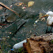 A polluted shoreline in Colombo, Sri Lanka is home to birds, lizards, fish and other wildlife. The animals show tremendous resiliance surviving in such a deteriorated environment.