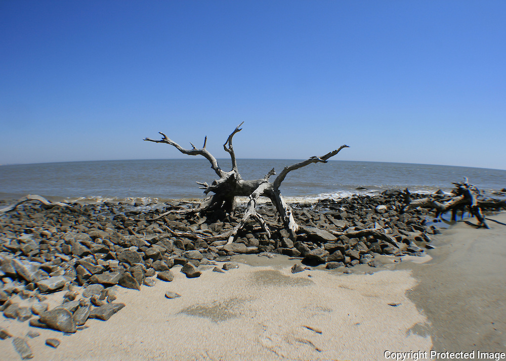 Petrified tree on Driftwood Beach, Jekyll Island amid rocky rip rap, fisheye view