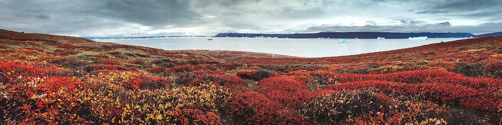 Arctic Tundra at Harefjord Greenland