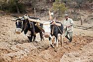 Ploughing a field in Thimphu Bhutan Asia