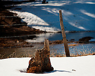 Tree stump along Lake Mary Road in Northern Arizona
