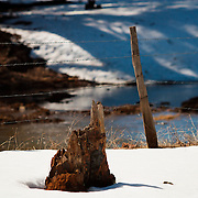 Tree stump along Lake Mary Road in Northern Arizona