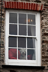 UK ENGLAND FOWEY 19FEB15 - A Westie dog looks out of a window in the town centre of Fowey, Cornwall, England. Fowey, a small fishing and harbour village was the living place of famous English writer Daphne Du Maurier and many of her novels are based here.<br /> <br /> jre/Photo by Jiri Rezac<br /> <br /> © Jiri Rezac 2015