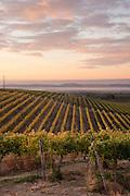Sunrise over Dubrul Vineyards, Rattlesnake Hills AVA, Yakima Valley,  Washington