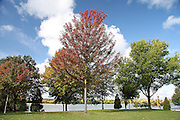 Voyageur Park is one of the truly splendid features of my home city of De Pere, Wisconsin. Here, there exists a variety of trees, each having a different schedule in terms of color change. This is always a perfect place to take a relaxing stroll, and is especially beautiful in the fall.