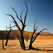 Dead trees jut out of the stark sandy landscape in the Dead Vlei area of Sossusvlei. Namibia boasts the world?s oldest and largest sand dunes, extending for 400 miles along the coast and more than 80 miles inland. July 17, 2008. Photo by Evelyn Hockstein for The New York Times.