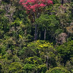 FLORESTAS / Forests