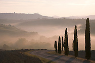 Early morning mist and cypress tress in the Val d'Orcia, Tuscany, Italy