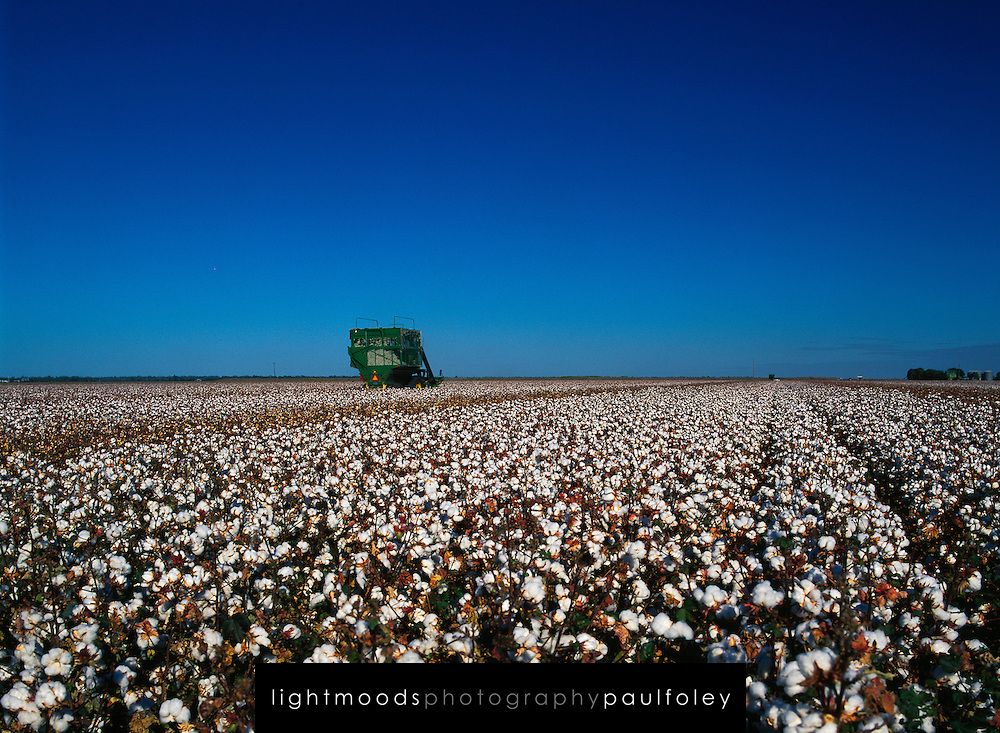 Harvesting Cotton, Narrabri, NSW, Australia