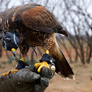 Images from the Texas Hawking Association annual meet in Abilene, TX.