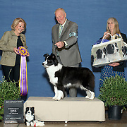 Border Collie Club of GLA 03/01/2019