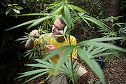 Pete, 23, from Lincolnshire, is smelling marijuana plants in the back garden of the Ingram Avenue mansion, on Saturday, Sep. 22, 2007, in Hampstead, London, England. The 22-room mansion was last sold for UK£ 3.9M in 2002 and is now awaiting planning permissions to be demolished. Two new houses will soon be taking its place. Million Dollar Squatters is a documentary project in the lives of a peculiar group of squatters residing in three multi-million mansions in one of the classiest residential neighbourhoods of London, Hampstead Garden. The squatters' enthusiasm, their constant efforts to look after what has become their home, their ingenuity and adventurous spirit have all inspired me throughout the days and nights spent at their side. Between the fantasy world of exclusive Britain and the reality of squatting in London, I have been a witness to their unique story. While more than 100.000 properties in London still lay empty to this day, squatting provides a valid, and lawful alternative to paying Europe's most expensive rent prices, as well as offering the challenge of an adventurous lifestyle in the capital.