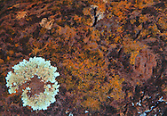 Landscape, rock, lichen,Kauai,Hawaii